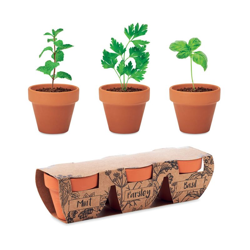 Zestaw 3 glinianych doniczek z nasionami